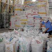 NHNN yêu cầu các ngân hàng hạ lãi suất cho vay thu mua lúa gạo xuống 6%