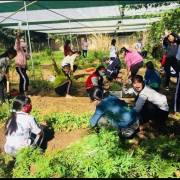 Chuyện Ino Mayu dạy học trò trồng rau hữu cơ