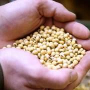 Giá nông sản Mỹ đồng loạt đi lên