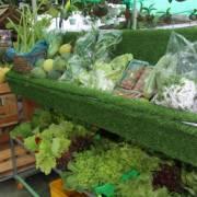 Thầy giáo miệt vườn làm du lịch từ nông nghiệp sạch