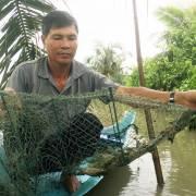 Nông dân nuôi tôm thành cổ đông, chia lợi nhuận cùng doanh nghiệp