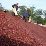 Thị trường thế giới: nhiều mặt hàng tăng giá, cà phê hồi phục mạnh