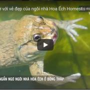 [Video] Ngẩn ngơ với vẻ đẹp của ngôi nhà Hoa Ếch Homestay ở Đồng Tháp
