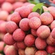 Xuất khẩu trên 13.000 tấn vải quả tươi sang Trung Quốc