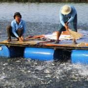 Thủy sản khó đạt mục tiêu xuất khẩu 10 tỷ USD