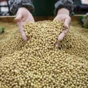 Một số doanh nghiệp Trung Quốc muốn mua nông sản Mỹ