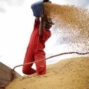 Trung Quốc vẫn mua đậu tương của Mỹ