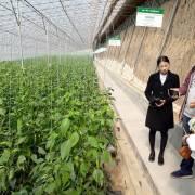 Tour học tập nông nghiệp công nghệ cao: quảng cáo nổ, thực tế thất vọng