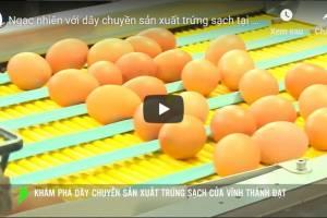 [Video] Khám phá dây chuyền sản xuất trứng sạch Vĩnh Thành Đạt