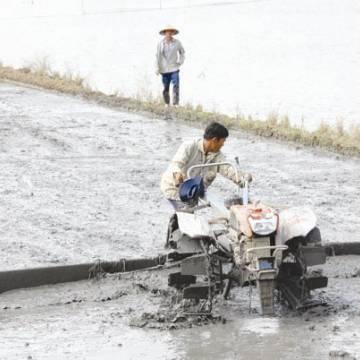 Ba nhóm giải pháp để phát triển nông nghiệp ĐBSCL sau đại hạn mặn