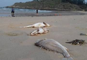 Hội Nghề cá Việt Nam loại trừ nguyên nhân thủy triều đỏ