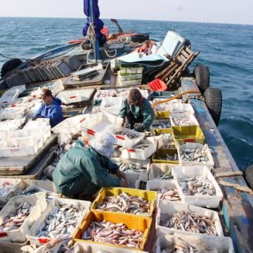 Ngân hàng Chính sách Xã hội hỗ trợ ngư dân vụ cá chết bất thường