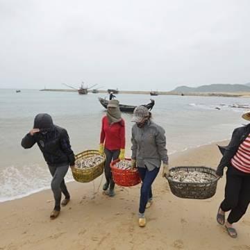Quảng Bình công bố danh sách điểm thu mua hải sản cho ngư dân