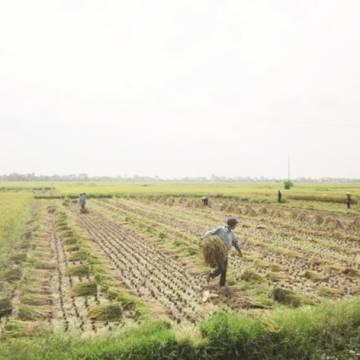 Không cần giữ 3,8 triệu ha đất lúa