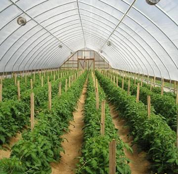 TPHCM xúc tiến đầu tư các khu nông nghiệp công nghệ cao