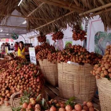 Công nghệ bảo quản sau thu hoạch lạc hậu khiến nông sản Việt kém cạnh tranh