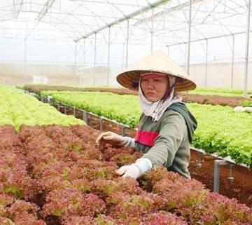 Khan hiếm nhân lực làm nông nghiệp sạch