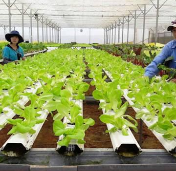 Rào cản ngáng chân doanh nghiệp đầu tư vào nông nghiệp