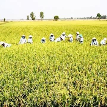 Tập đoàn Lộc Trời phát hành cổ phiếu giá ưu đãi cho hơn 1.700 nông dân