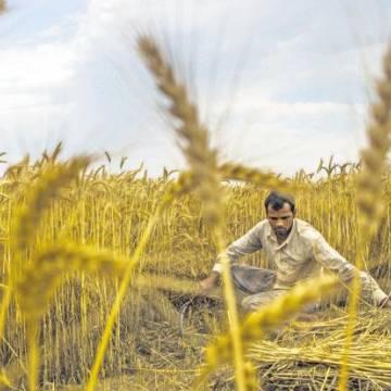 Thách thức đất đai trong cuộc khủng hoảng nông nghiệp Ấn Độ