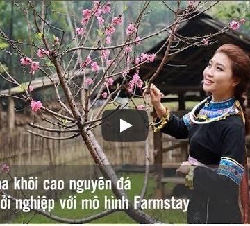 [Video]: Hoa khôi miền Cao nguyên đá quyết chí khởi nghiệp với mô hình Farmstay