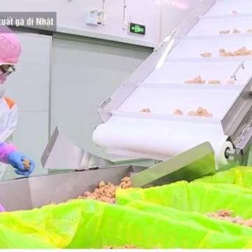 [Video]: Dây chuyền 'chuẩn-chất' đưa con gà Việt Nam vào thị trường Nhật Bản