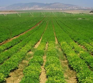 Bí quyết thành công của nông nghiệp Israel là 'không có gì'