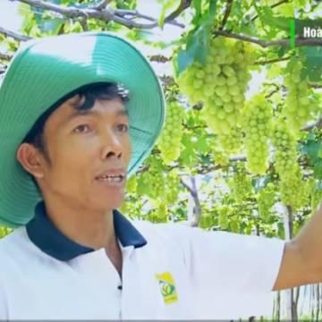 [Video]: Thăm vườn nho sạch của quán quân Dự án khởi nghiệp 2015