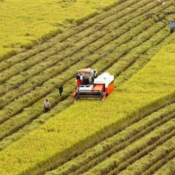 Đầu tư vào nông nghiệp: Tiếp cận đất đai đang là cản trở lớn