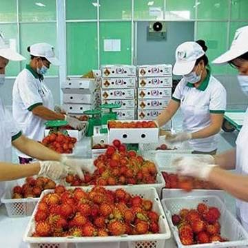 Hướng đi bền vững cho xuất khẩu rau quả