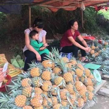 Nông sản sang Trung Quốc: đối mặt khúc quanh hiểm nghèo