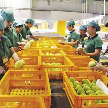 Nông sản Việt không còn thấy 'xấu hổ' khi sang châu Âu