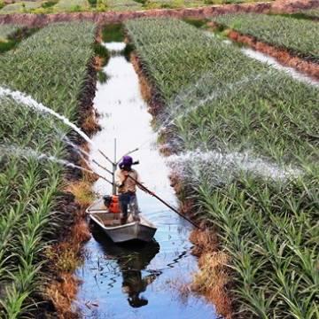 Đầu tư nông nghiệp công nghệ cao vẫn khó tiếp cận nguồn lực
