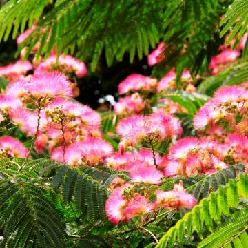 Khoảng lặng: Hoa mắc cỡ