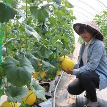ĐBSCL: Chuyển hướng sản xuất theo kinh tế nông nghiệp