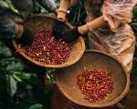 Xây dựng chứng nhận cho cà phê chất lượng cao