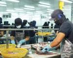 Cá tra ùn ứ từ ao nuôi, nhà máy đến kho lạnh