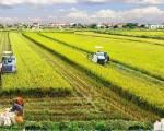 Đòn bẩy chính sách cho đất nông nghiệp