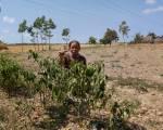 [Photo] Đồng khô lúa cháy ở miền Tây