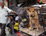 Trung Quốc tiến tới cấm ăn thịt chó