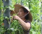 Bán vườn rau cho các sân thượng