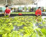 TP.HCM gỡ vướng xây dựng cho sản xuất nông nghiệp