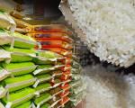 Nhu cầu gạo chất lượng cao gia tăng tại Hàn Quốc