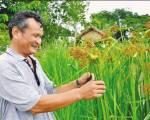 Ông Tư Việt Lúa Mùa – người nhặt từng hạt tấm