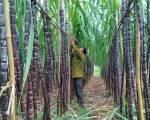 Thái Lan muốn Việt Nam xem lại thuế chống bán phá giá đường