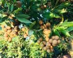 Bộ NN-PTNT lập đề án vùng nguyên liệu nông sản đạt chuẩn xuất khẩu
