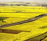 Cần một thị trường đất nông nghiệp