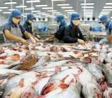Bộ Nông nghiệp Mỹ tiếp tục thanh tra cá tra Việt Nam