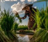 Thái Lan 'bám chắc' nông nghiệp để vượt khủng hoảng Covid-19