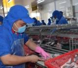 Bộ Nông nghiệp đề nghị Bộ Tài chính xử lý vướng mắc thuế với thủy sản